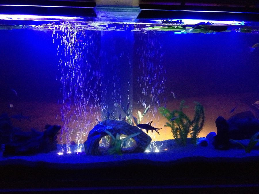 Fancy goldfish and tropical fish in same tank my for My fish tank water is cloudy