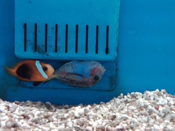 Petco where the healthy pets go my aquarium club for Petco betta fish