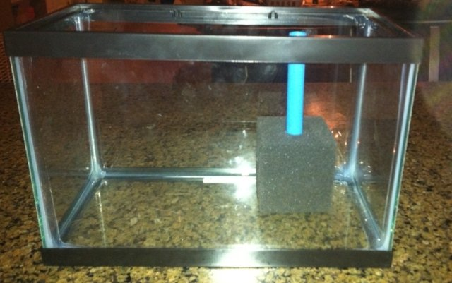 How to make an effective diy sponge filter for your for Diy gravel filter