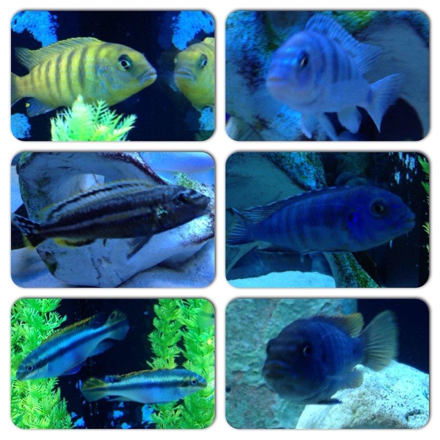My healthy happy fish my aquarium club for Why is my fish tank so cloudy