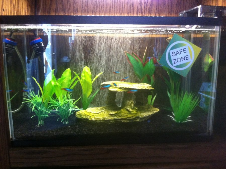 Cycling for the first time the ins and outs my for Cycling a fish tank