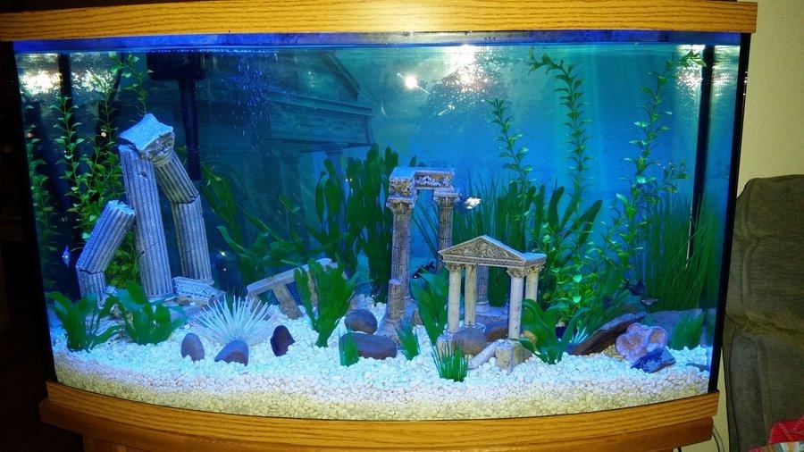 My 40 gallon community freshwater tank my aquarium club for 10 gallon fish tank stocking ideas