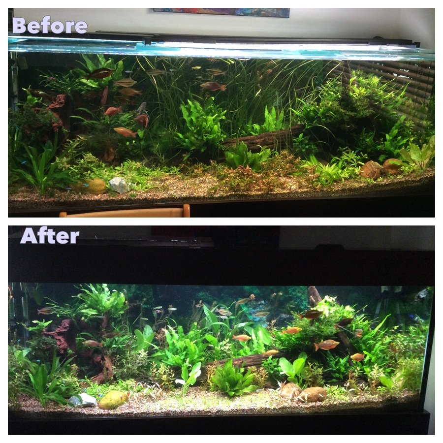 Getting rid of algae my aquarium club for White algae in fish tank