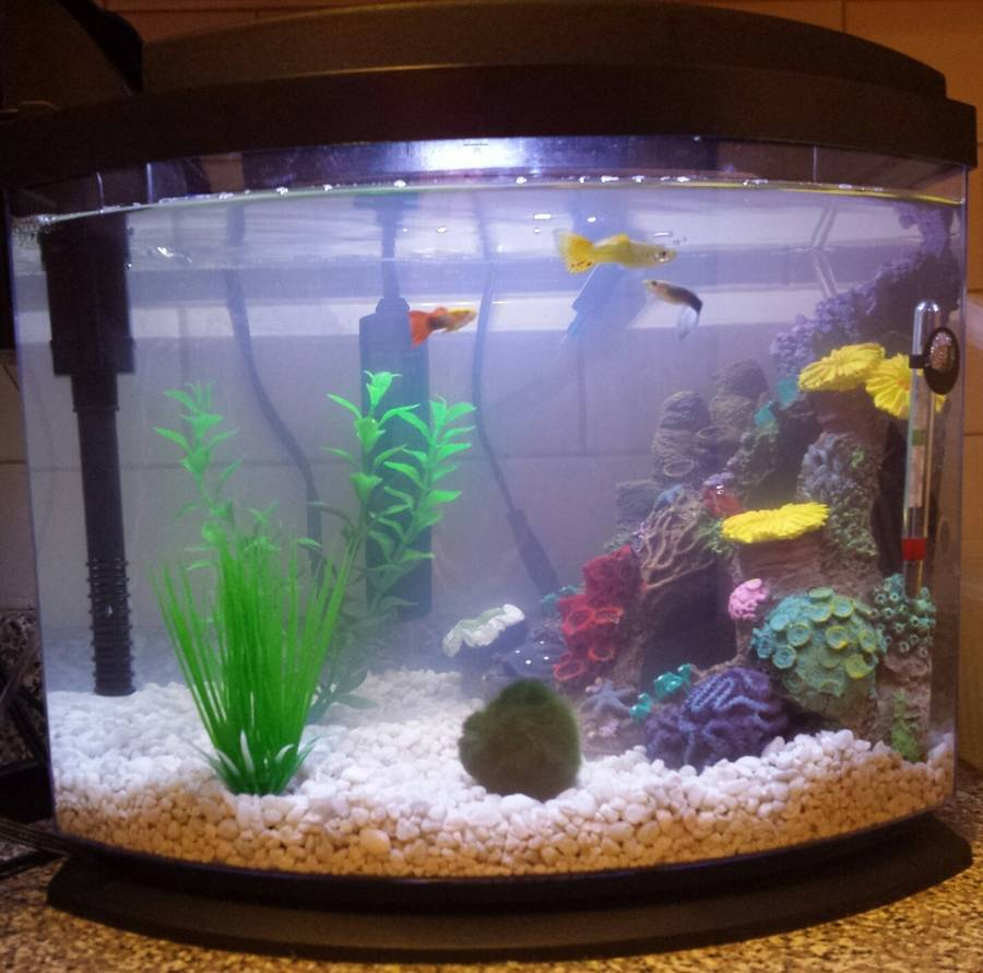 new tank cloudy water and no fish my aquarium club