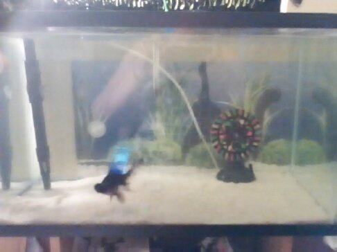 How to change gravel to sand without starting the cycle for Cloudy fish tank water in established tank