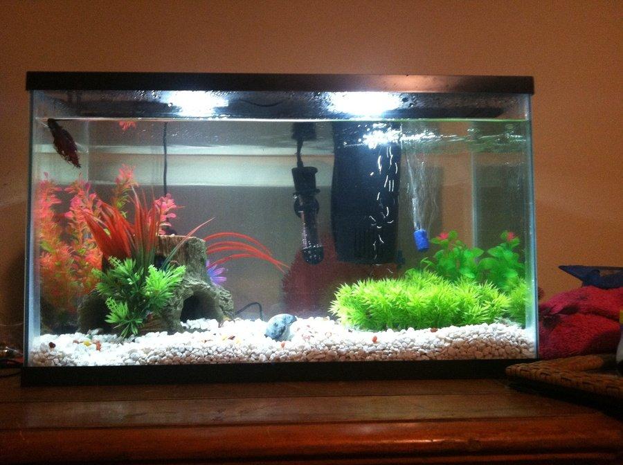 Betta fish tank advice my aquarium club for Why is my fish tank so cloudy