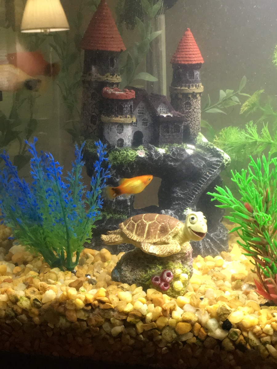 Freshwater fish tank alkalinity - When I Was Growing Up We Had A 75 Gallon Freshwater Community Aquarium At That Time Like Many Who Were Novice Aquarium Owners We Didn T Know About The