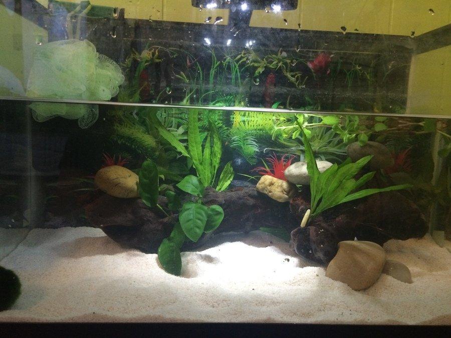 The Basics Of Keeping Axolotls My Aquarium Club