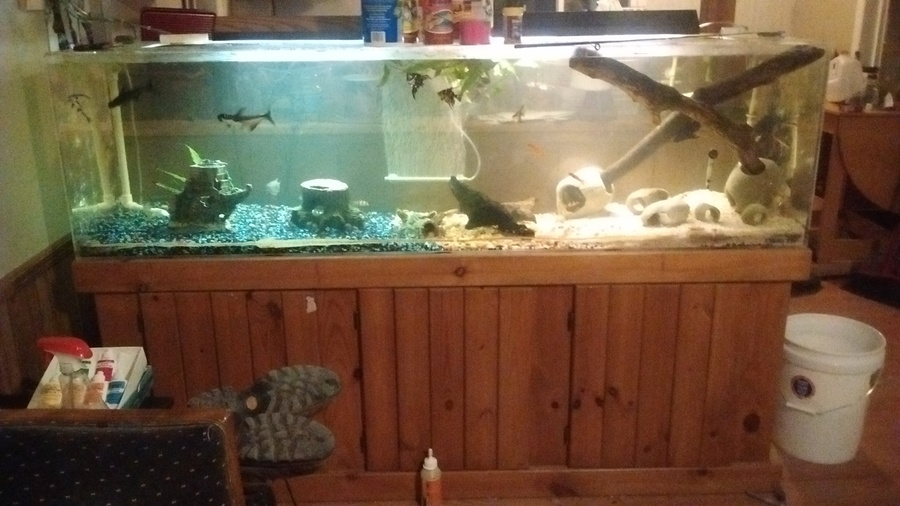 New acrylic 120 gallon tank my aquarium club for 37 gallon fish tank