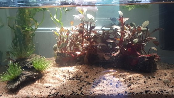 Can you use beach sand in a freshwater aquarium my for Soil 7 days to die