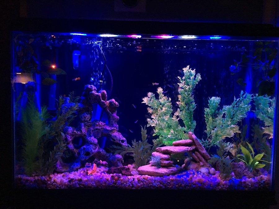 Fishless Cycle My Aquarium Club