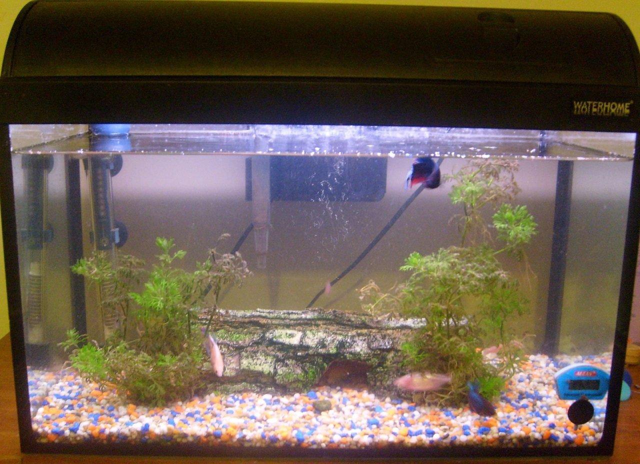 Aquarium-Tank-xe5ys2uj5o.jpg