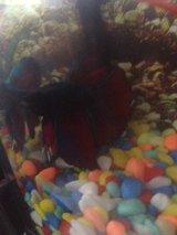 Epsom Salt Baths My Aquarium Club