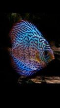 Tropical_fish avatar