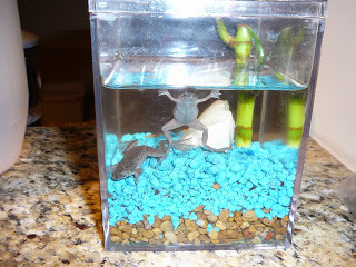 Will 5 neon tetra fish and 2 african dwarf frogs be good for Fish tank frogs