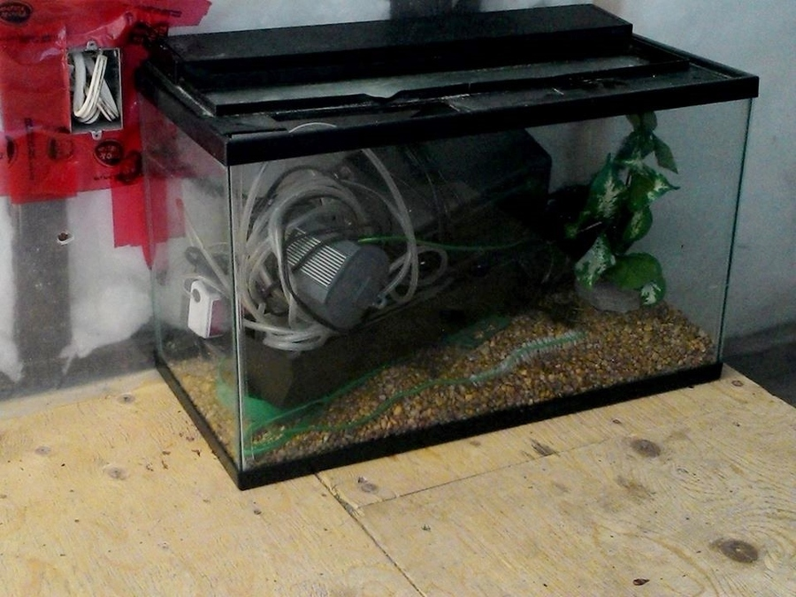 Proper way to clean tank or throw it out my aquarium club for Cleaning fish tank with vinegar