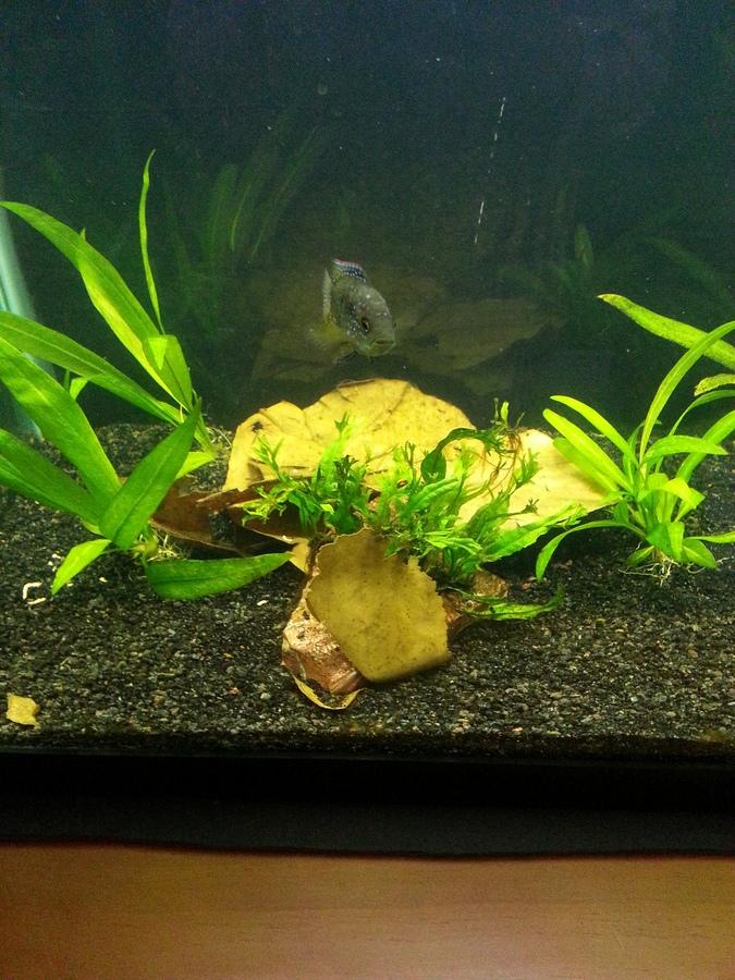 how to prepare peat moss for aquarium