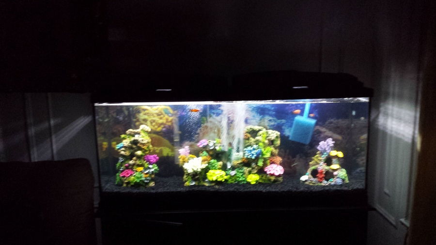 I have a new 55 gallon tank with 11 tropical fish temp is for How to lower ph in fish tank