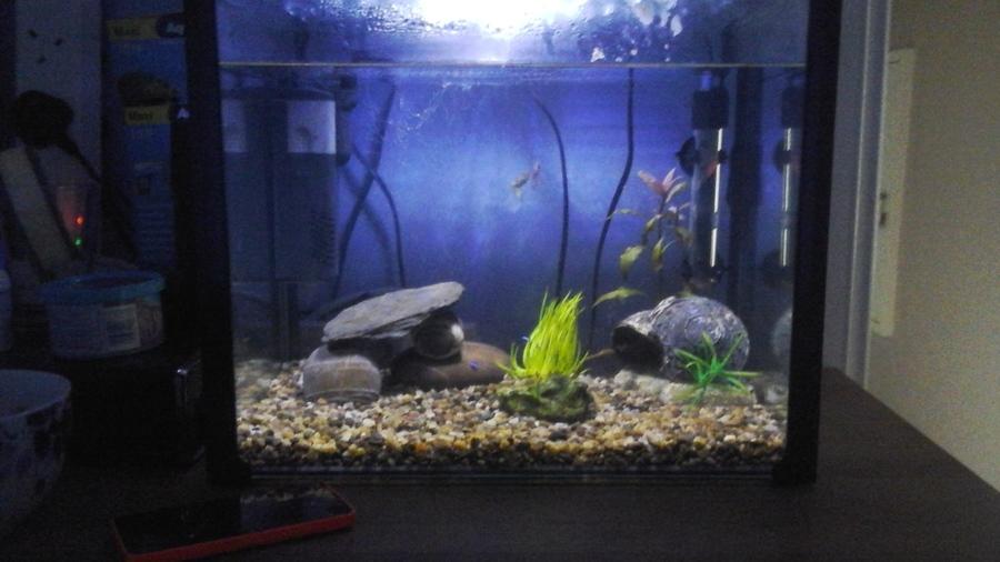 10 gallon tank fish my aquarium club for How many gallons is my fish tank