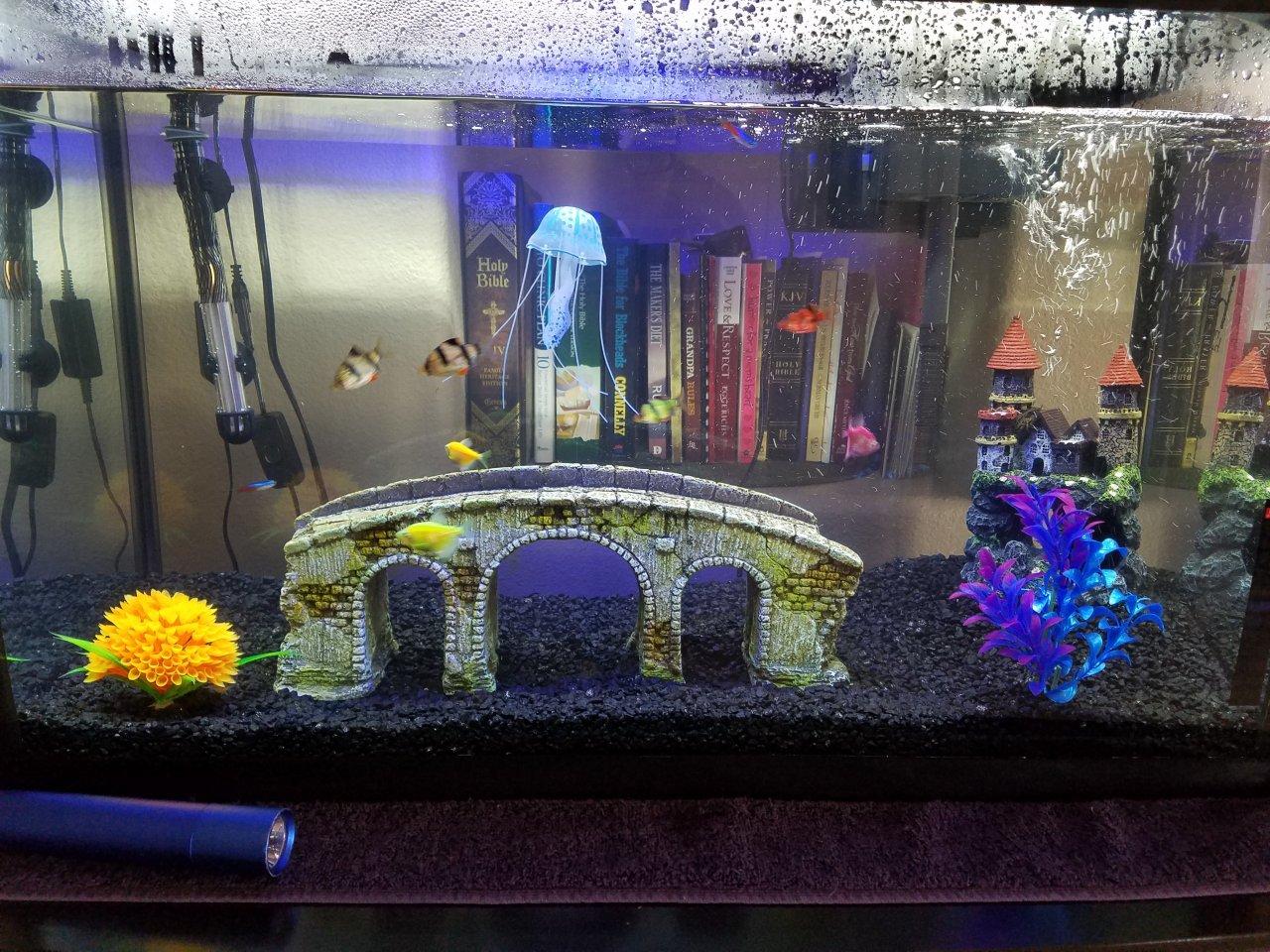 Freshwater fish tank has cloudy water - Freshwater Fish Tank Has Cloudy Water