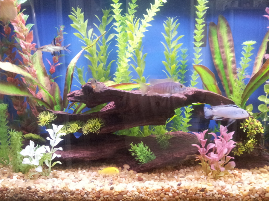 Here is my tank it look good to me and the fish seem happy for Nitrite in fish tank