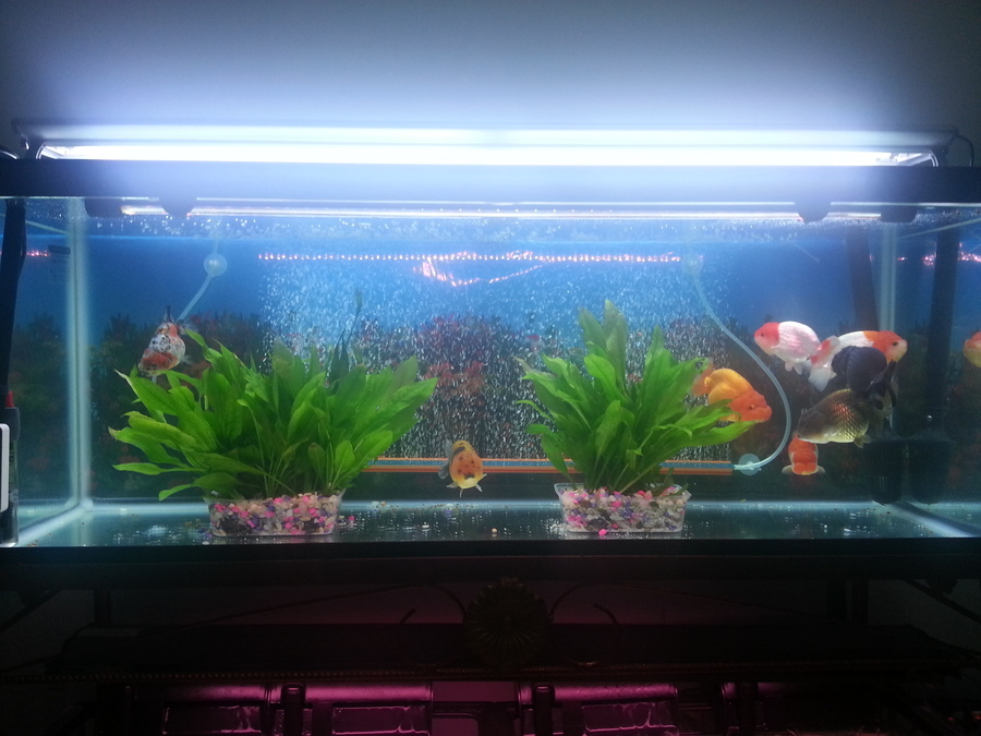 Ammonia at 0 5 mg nitrite and nitrate at the highest for Nitrite in fish tank