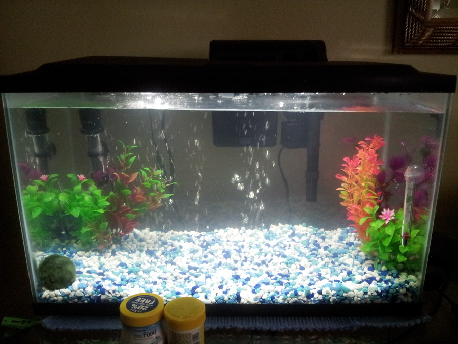 Need some help with a new tank i 39 m very new to fishy life for New fish tank cloudy