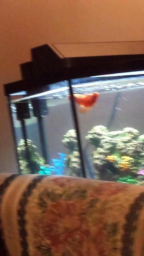 I bought two parrot fish from walmart a month ago on for Fish heater walmart
