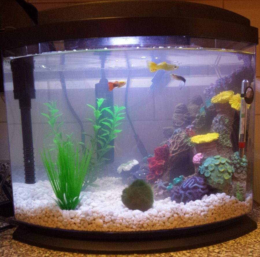 Cloudy water fish swimming up top bubbles not popping for How to keep fish tank clean without changing water