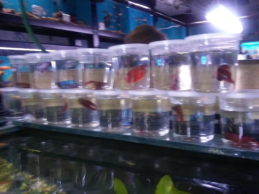 Strictly Fish Ca My Aquarium Club
