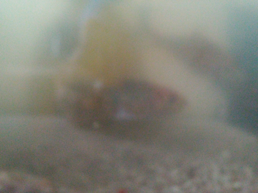 Fish tank really cloudy my aquarium club for My fish tank water is cloudy