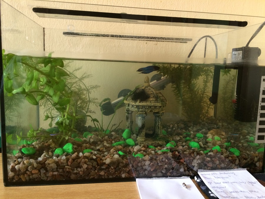 High nitrite levels and fin rot please help my aquarium for Nitrite in fish tank