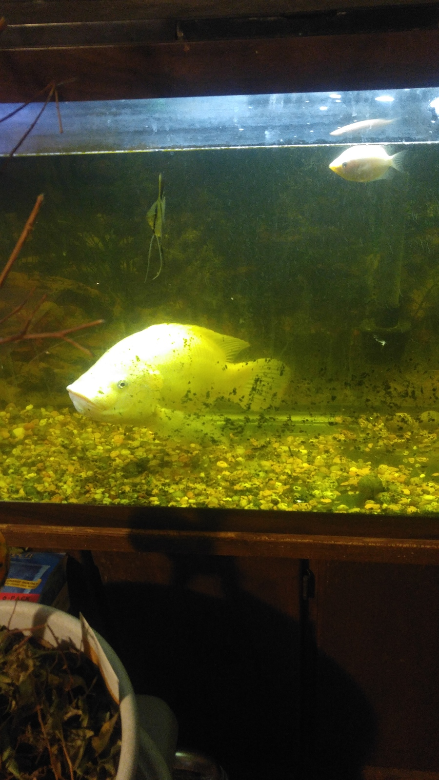 Black mold in my fish tank my aquarium club for My fish tank