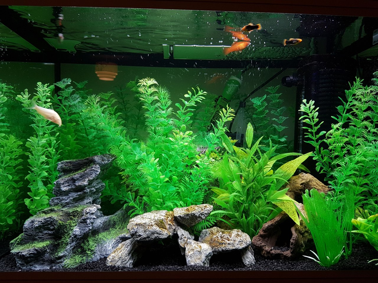 Freshwater fish tank ammonia levels - Ammonia Levels Will Not Drop Please Help I Have Been Cycling My Tank Wit