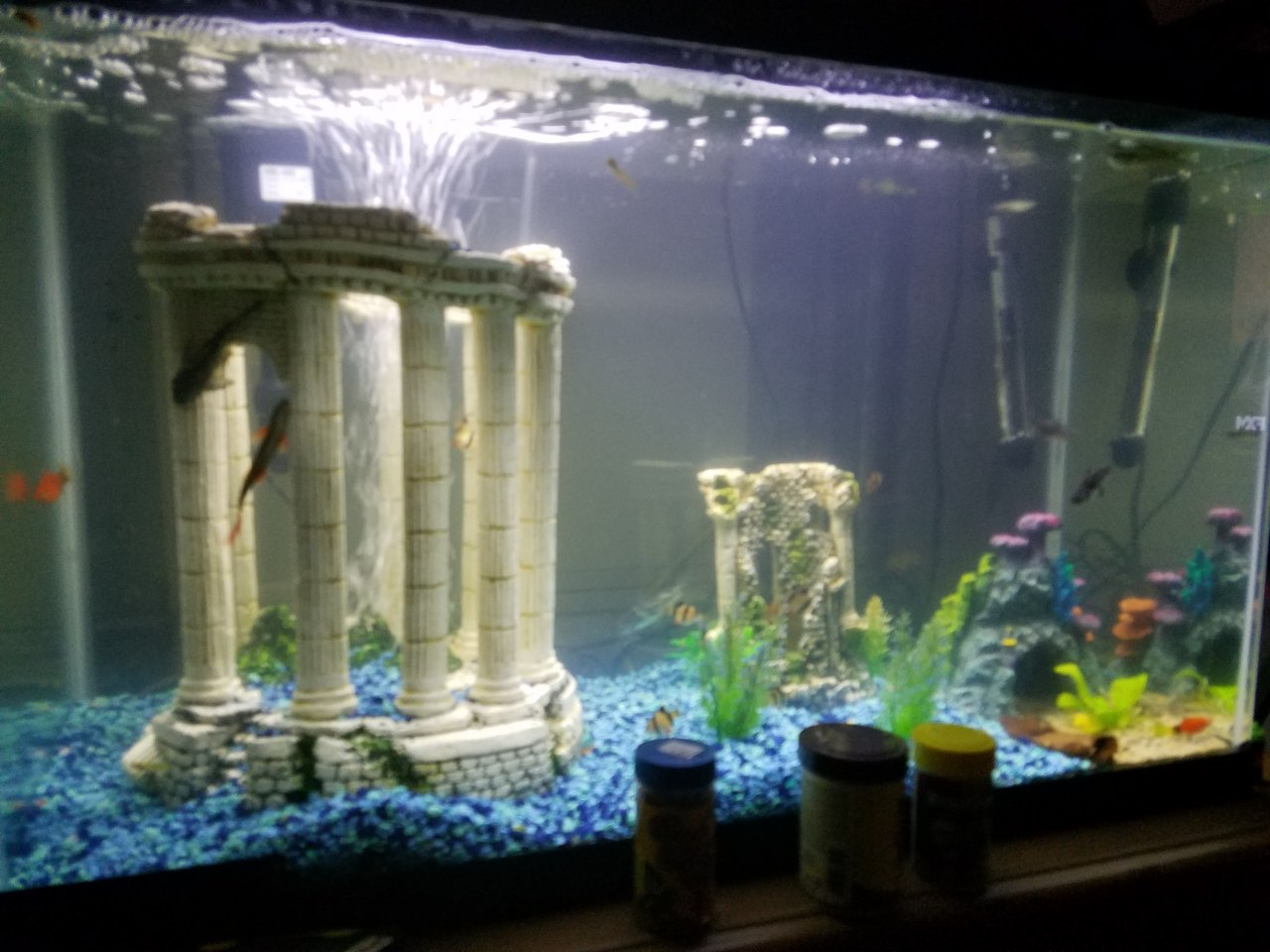 Freshwater Aquarium Fish Under 1 Inch - I have 30 fish in one 30 gallon aquarium is it too crowded please help i have a 4 in pictus catfish 3 inch silver arowana 2 sharks like 9 tiger barbs