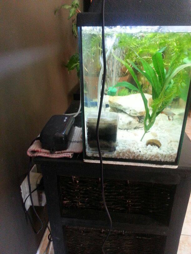 how to fix a noisy air pump my aquarium club. Black Bedroom Furniture Sets. Home Design Ideas