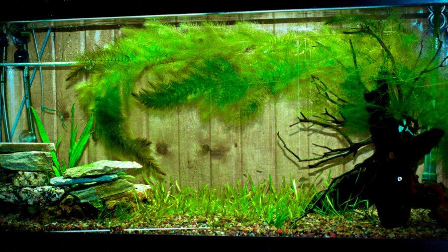 Plastic Floating Aquarium Plants