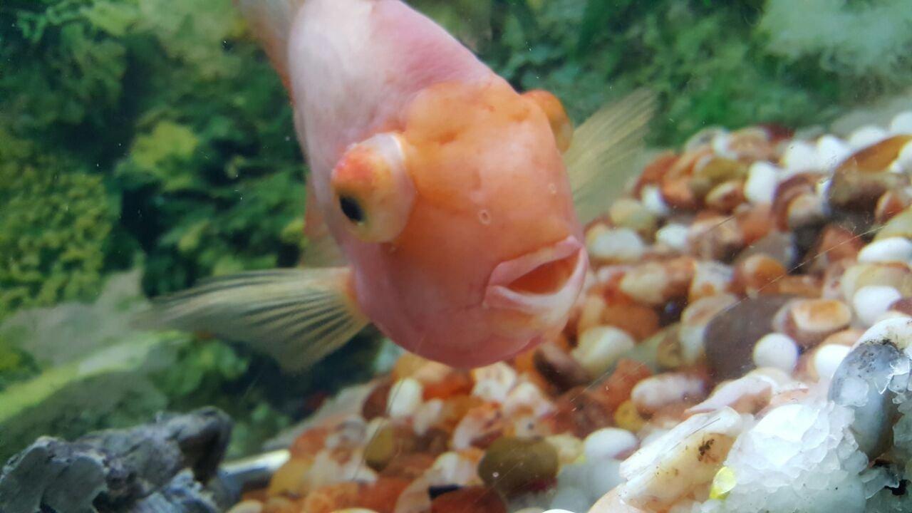 Fish aquarium in chandigarh - Regards