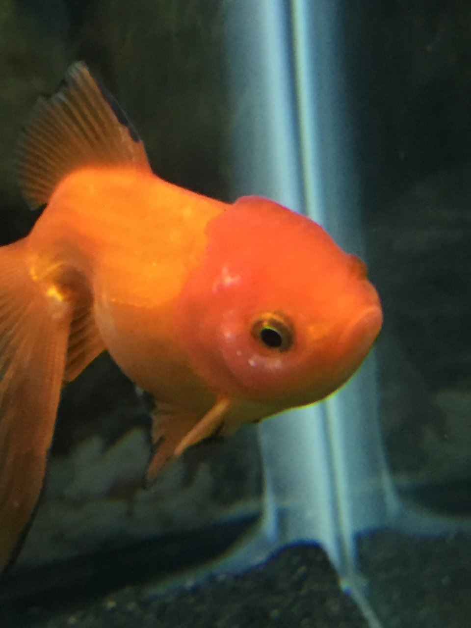 Fish in tank diseases - Fish In Tank Diseases