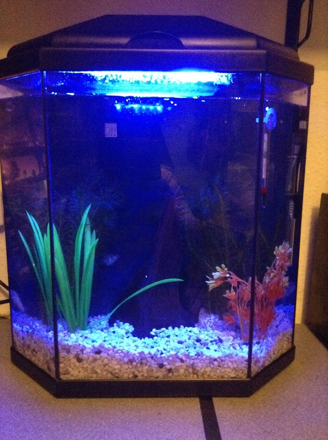 Just recently got a tropical fish tank 40l tank for Fish tank temperature