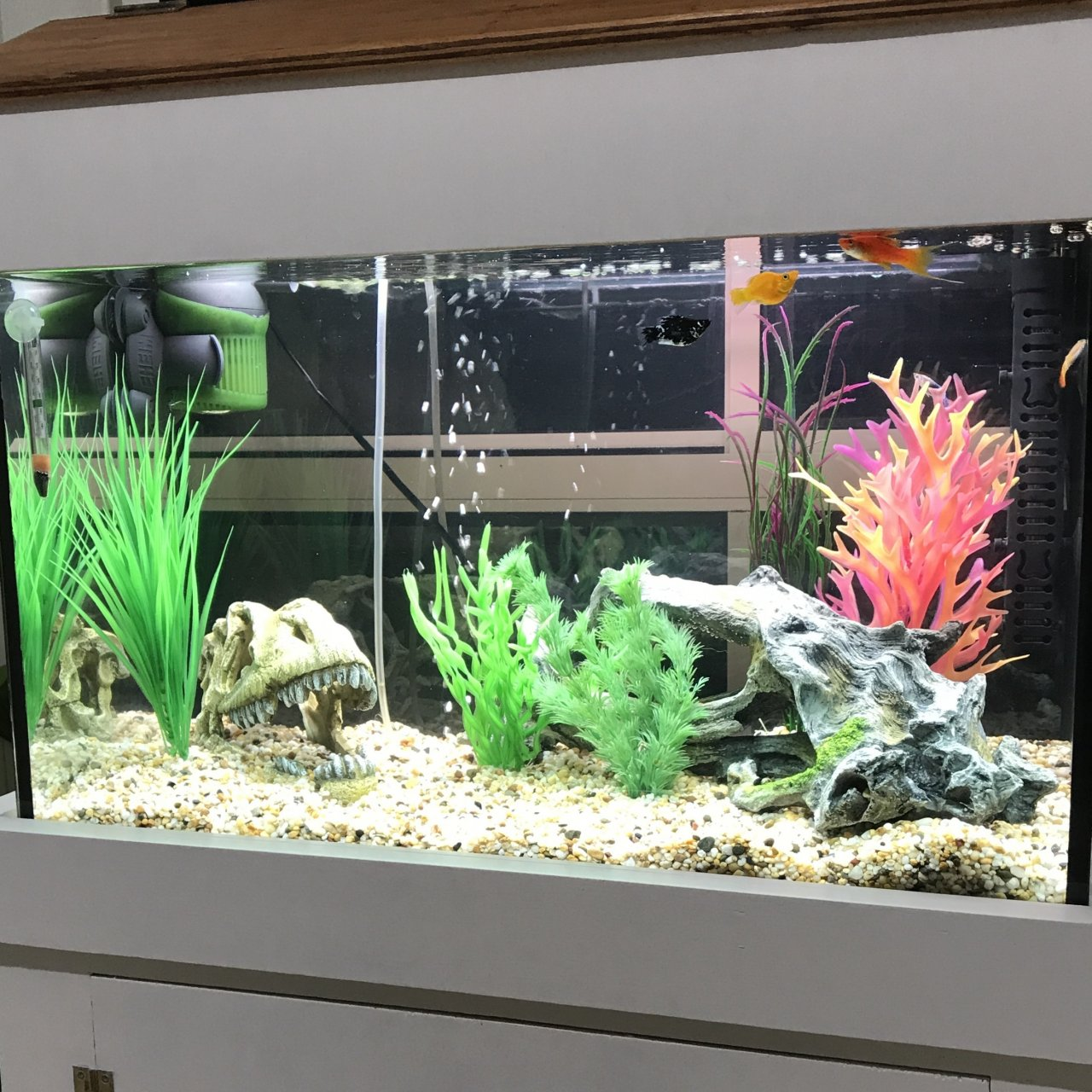 Freshwater fish tank ammonia levels - I Ve Attached Photos Of Both Tanks For Reference