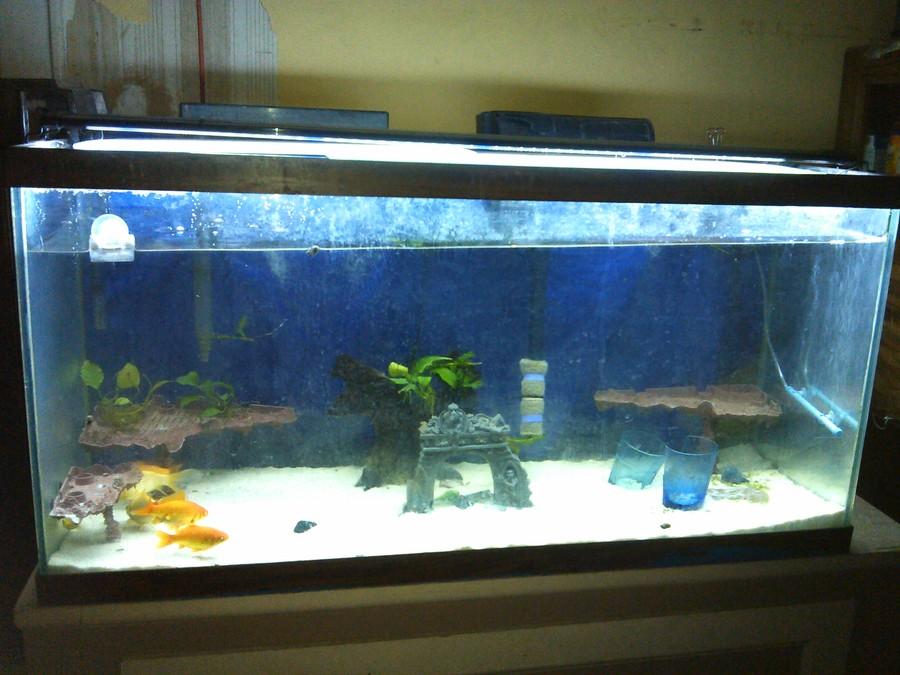 Floor aquarium related keywords floor aquarium long tail for Floor aquarium