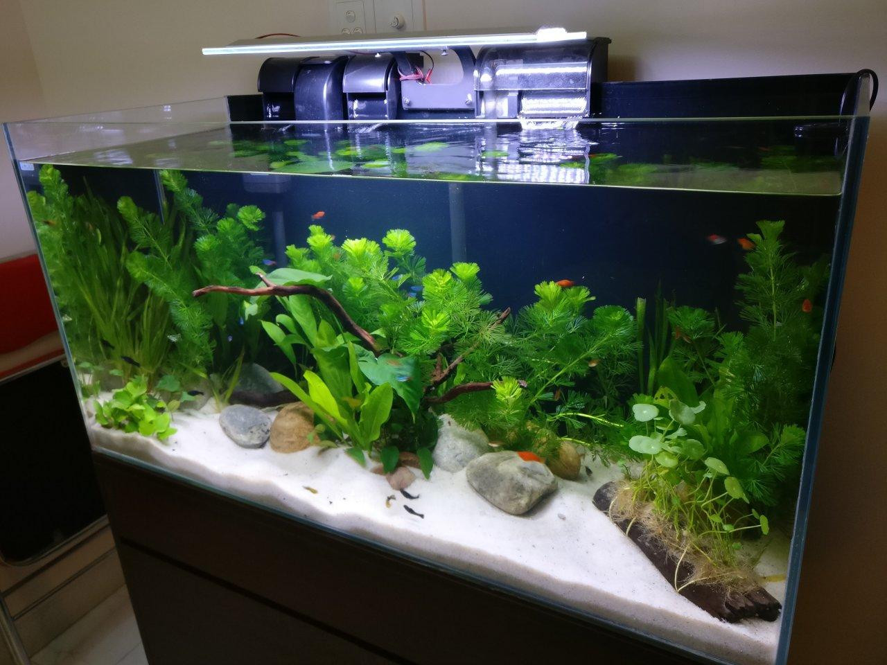Fish in my aquarium are dying - Fish In My Aquarium Are Dying