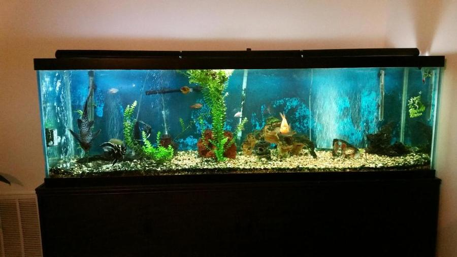 How often should water changes be done in a 125 gallon for 125 gallon fish tank