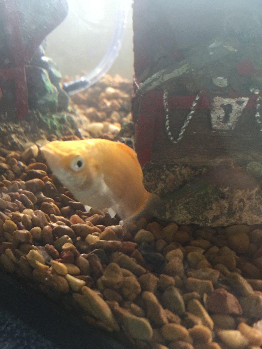 Freshwater aquarium fish not eating - Img_7919_v_1474903811 Jpg