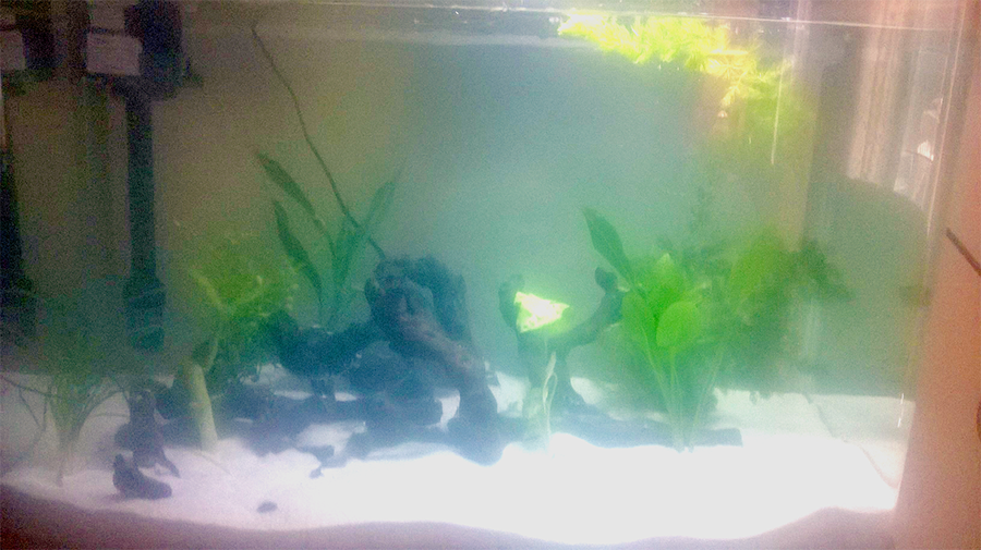 What type of fish should i put in my fully planted 45 gal for What fish should i put in my pond