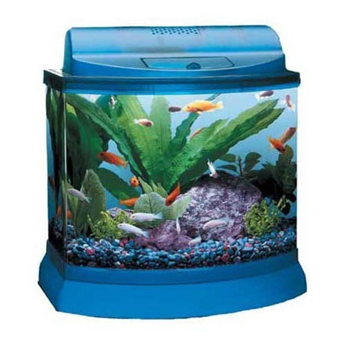 Betta shrimp tank my aquarium club for 5 gallon betta fish tank