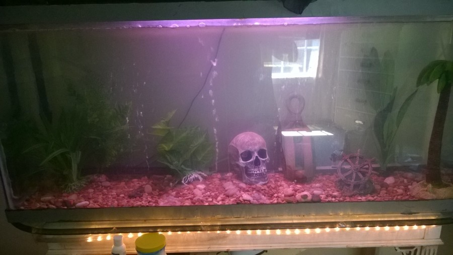 Newly sealed fish tank i have a 55 gallon fish tank that for How to reseal a fish tank