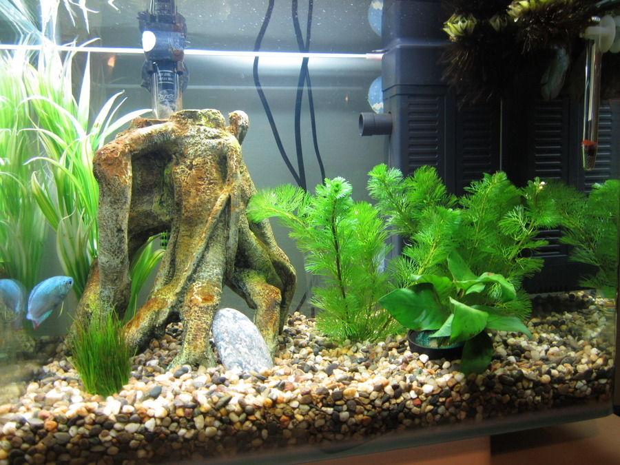 Do i need a airstone in my 10 gallon tank i have a for What do i need for a fish tank