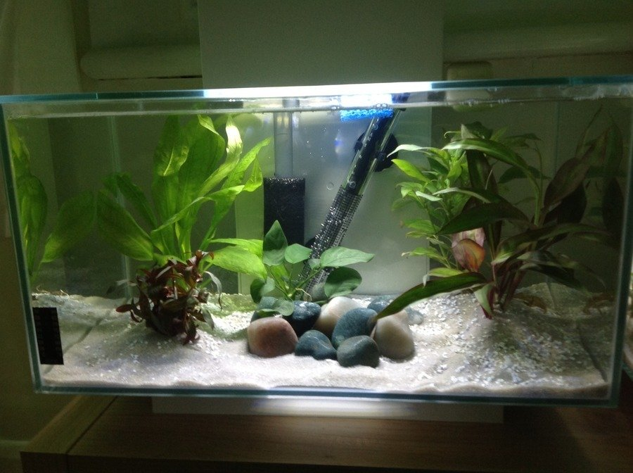 How do i set up the perfect betta tank my aquarium club for Fish tank set up